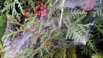 Eigenes Foto: Chaotisches Spinnennetz