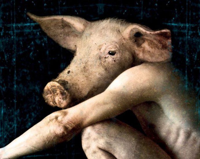 Ausschnitt Cover: Edward Lee: Das Schwein