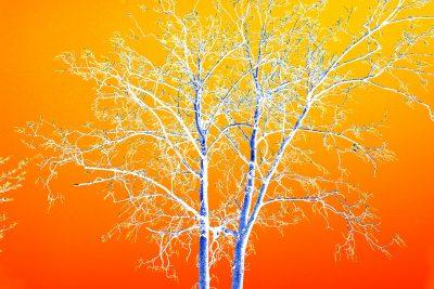 Eigenes Foto: Tree to Kill