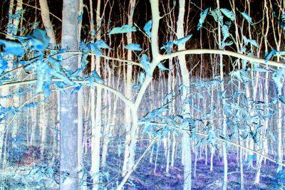 Eigenes Foto: Fieser Wald (invert)
