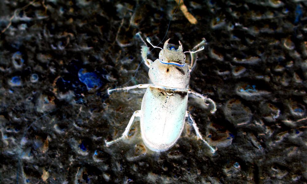 Eigenes Foto: Käfer invertiert
